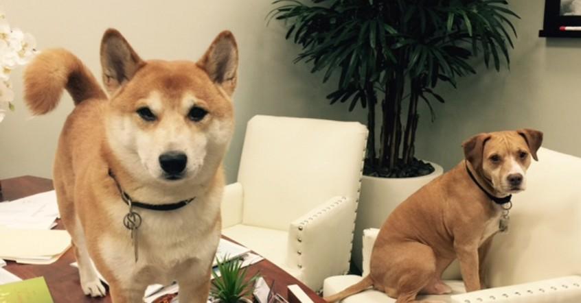 Broward Dog Adoption Center